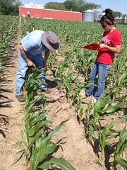 Roger Elmore and Jordan evaluating a corn stand two weeks after the storm-Zoubek