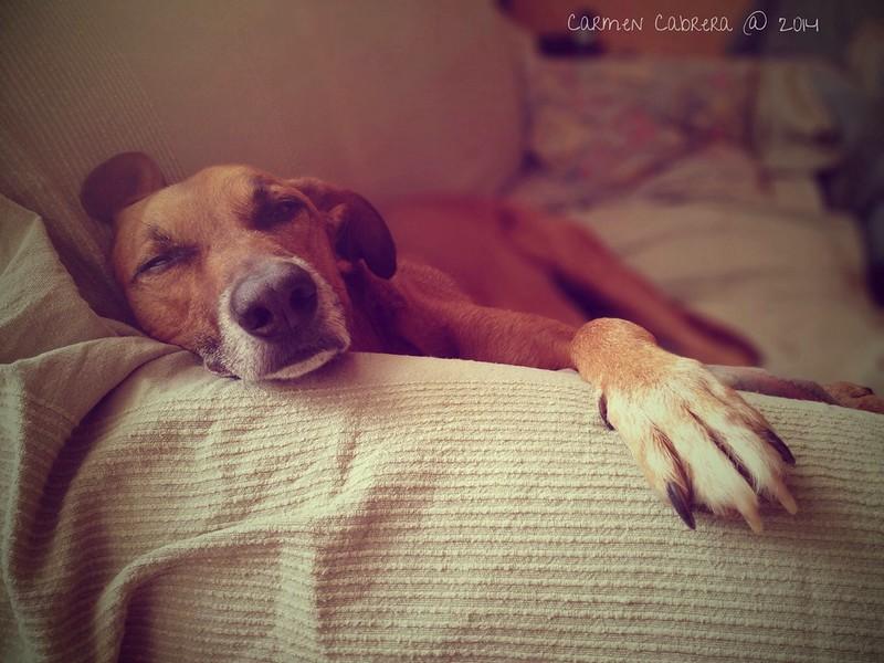 Resting, don't disturb please!