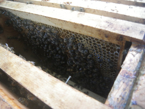 bees covering comb in box