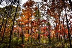 Autumn Colors at Cub Run Stream Valley Park - Chantilly VA