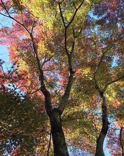 紅葉 #🍂 #autumnleaves