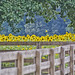Anderson Sunflower Farm by DrWoots
