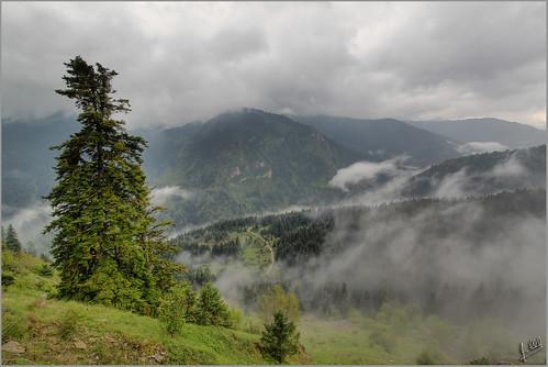 fog pine landscape desi pindos trikala ελλάδα τοπίο ομίχλη pertouli autumnlandscape περτούλι θεσσαλία greeklandscape τρίκαλα πίνδοσ δέση αιθήκων λξ