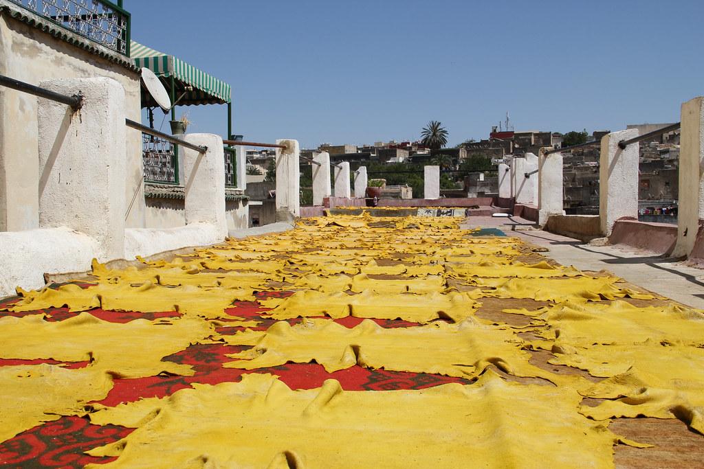 Un tannerie à Fez, Maroc. Que se cache-t-il derrière ces peaux étendues au soleil ? Quelles conditions pour les animaux et pour les hommes ?