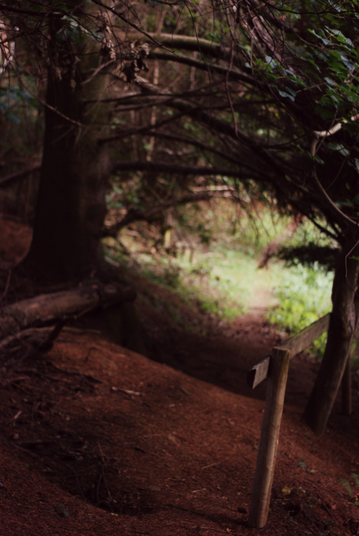 forest-2