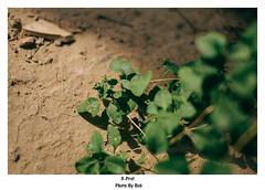 秋天随拍,好久没用xpro1拍照了
