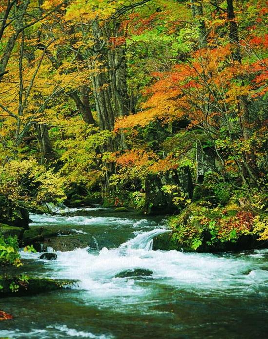 奧入瀨溪流 (3)