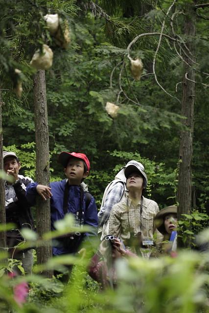 樹上のアオダイショウに興味津々.「でっかいなぁ」