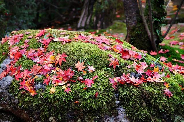 【旅遊】跟著Rose 慢慢走- 京都首屈一指的豪華Area *世界遺產。三寺院大集合(上)