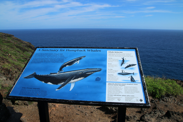 A sanctuary for humpback whales