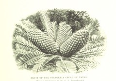 """British Library digitised image from page 491 of """"The Story of Africa and its Explorers [With plates and maps.]"""""""