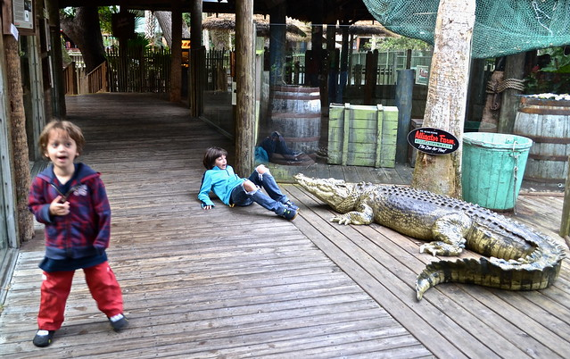 St. Augustine alligator farm - kids activities