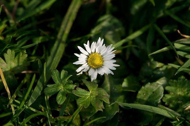 46: Daisy