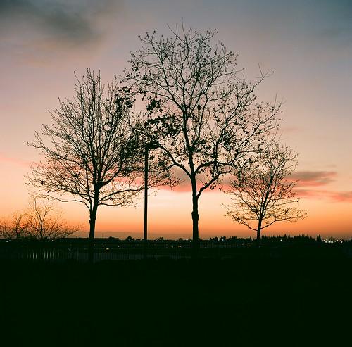 california trees winter sunset urban film night landscape evening airport suburban 100 bakersfield rolleicord ektar 6520 feb2012 johnpiazza lightpostlookslikeatreetrunk