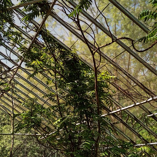 Abandoned Greenhouse No.10: The Structure of Escape