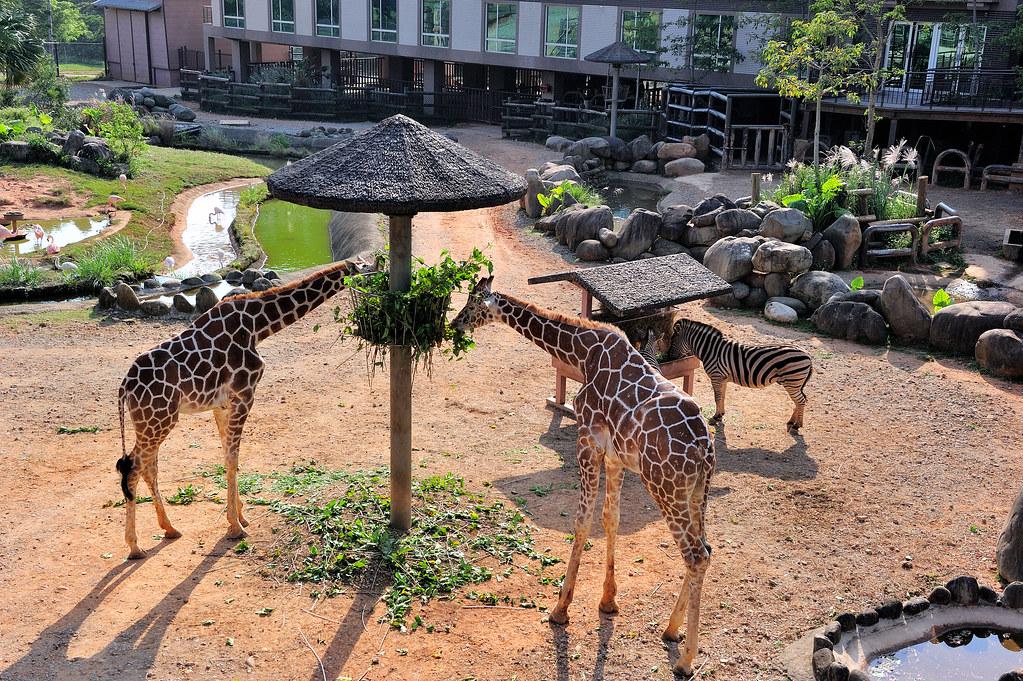 新竹關西【六福莊生態渡假旅館】~來去動物園住一晚~和動物零距離的住宿體驗!
