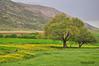 Spring Season In Lorestan Province - فصل بهار در استان لرستان