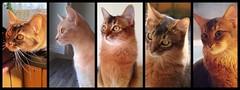 Alle kattene april 2014
