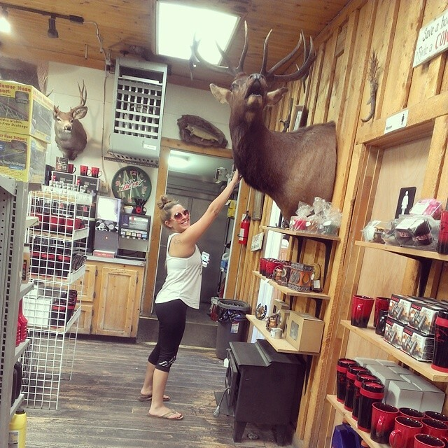 Hello moose #triouradventure #wherearewe #Wyoming #roadtrip