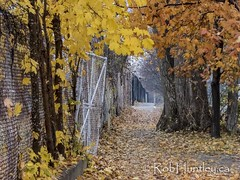 Autumn colour in mid-November.