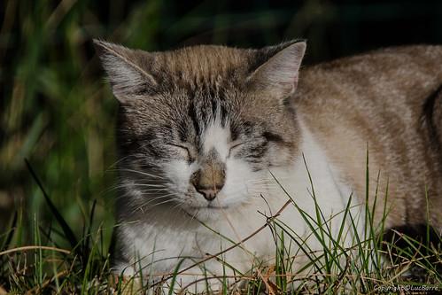 Le chat_7700