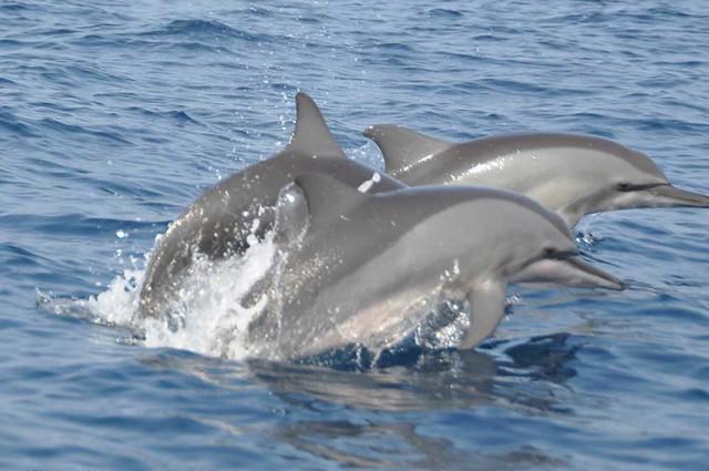 Dolphin watchin in Kalpitiya