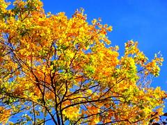 Wonderful Autumnal Colors