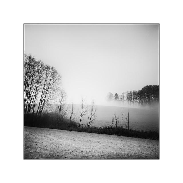 Foggy times