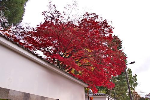 【写真】2012 紅葉 : 知恩院/2021-06-17/IMGP7990