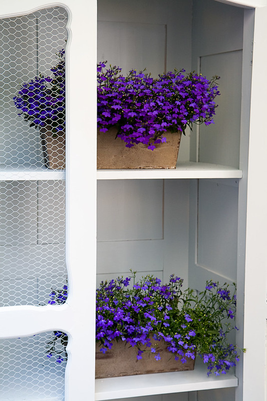 hatfair-flowers