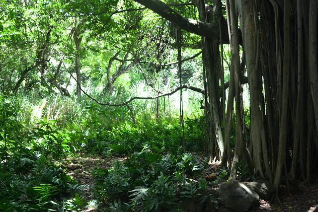 under the shade of a banyan tree