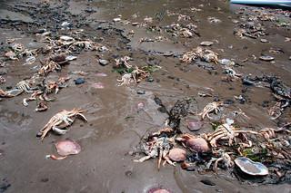Dead Crab beach