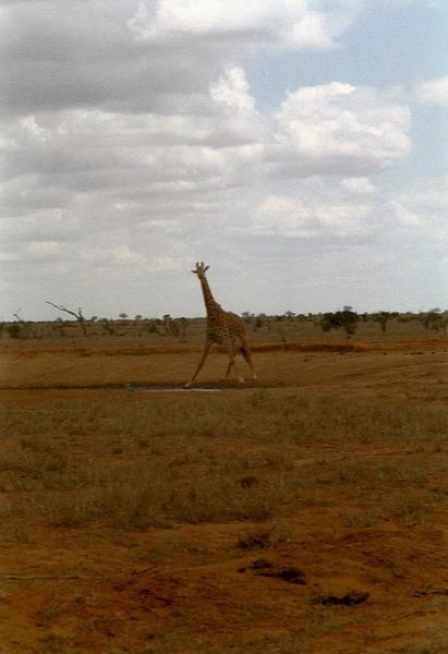 Kenia 2000 - 088
