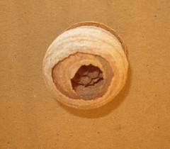 Wasp Nest by ohange2008