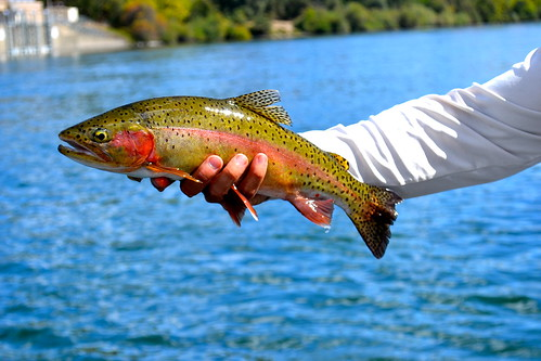 Cascade_Fly_Fishing_Sept-2013_103