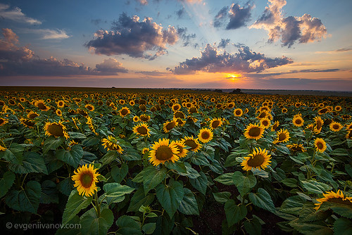 sunset sun nature clouds landscape colorful dramatic bulgaria sunflowers 2013 българия варна