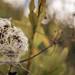 Cuddle Flower by steve morel