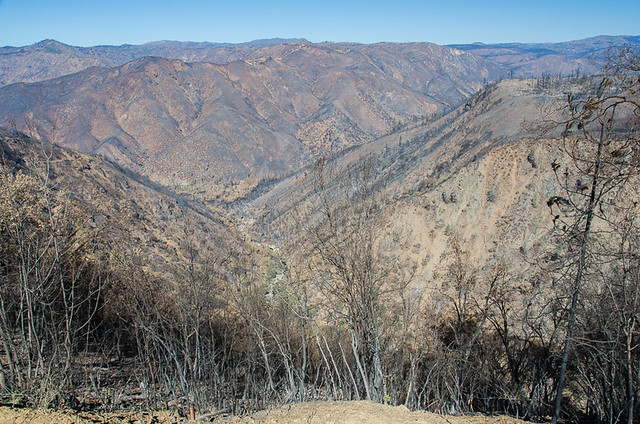 After the Rim Fire - Yosemite National Park