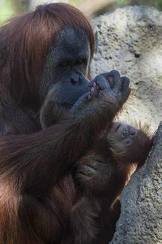 A Mother's Love by San Diego Zoo Global