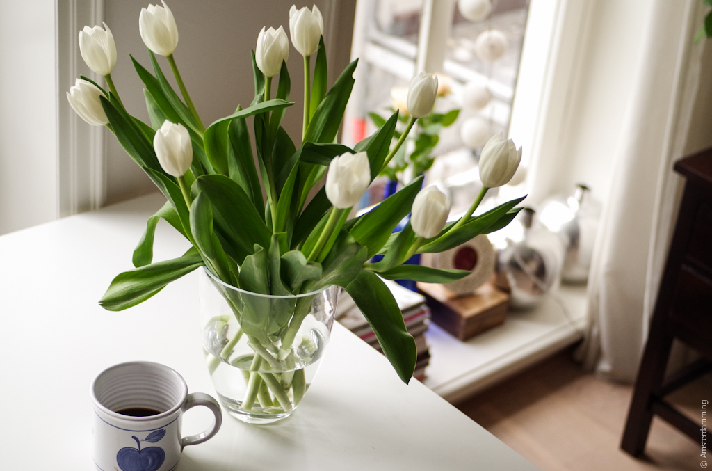 Amsterdam, Sunday Morning with Coffee and White Tulips