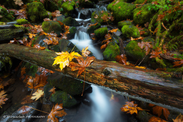 Autumn Yin Yang 1.0