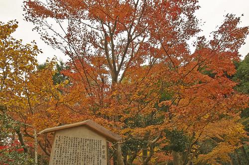 【写真】2013 紅葉 : 即宗院/2021-07-30/IMGP3429