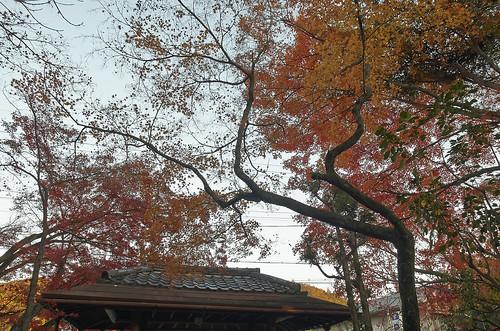 【写真】2013 紅葉 : 白沙村荘/2020-12-28/IMGP3685