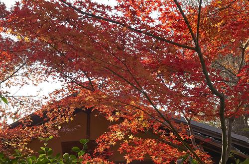 【写真】2013 紅葉 : 西行堂/2020-09-05/IMGP4743