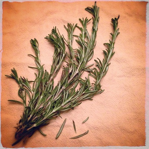 #fmsphotoaday December 10 - R is for... Rosemary