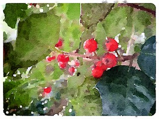 Painted Holly