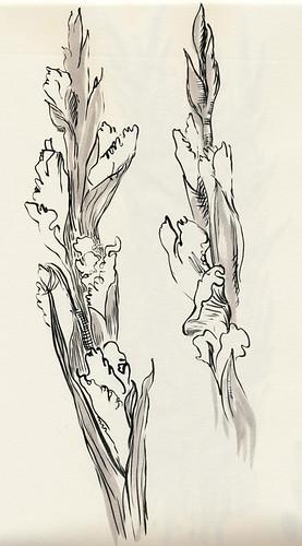 December 2013: Gladiolus - Lines