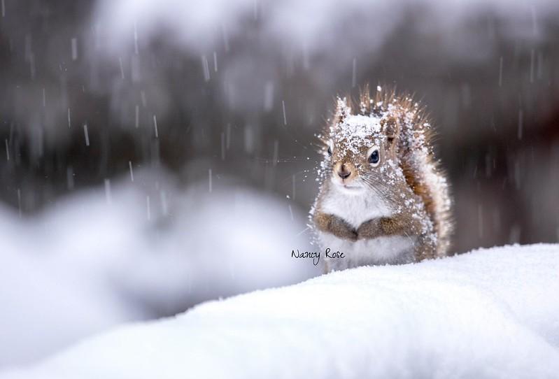 snowing again   ;-)