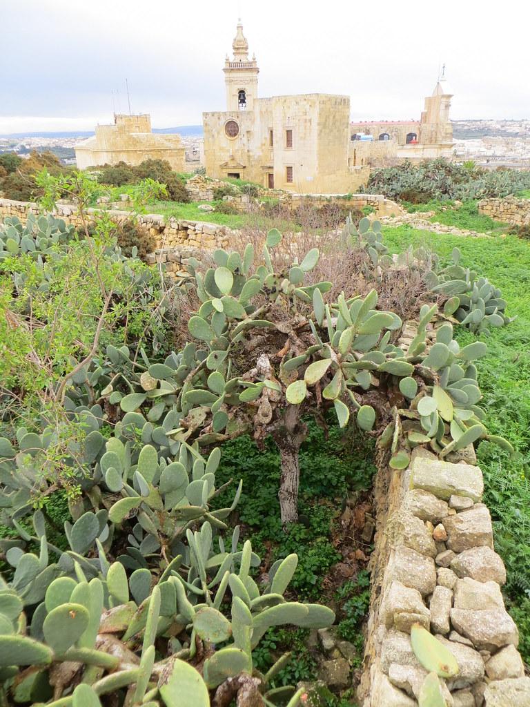 Malta cu Divertis 11844001516_3c5e31e7a6_b