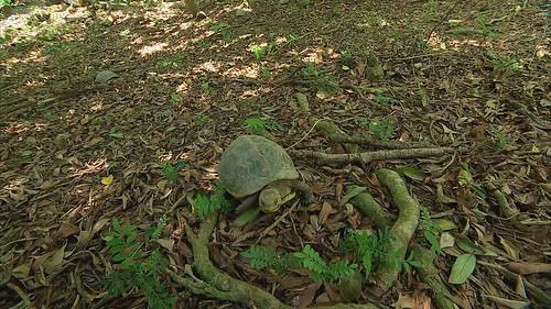 讓保育龜回到原生環境。
